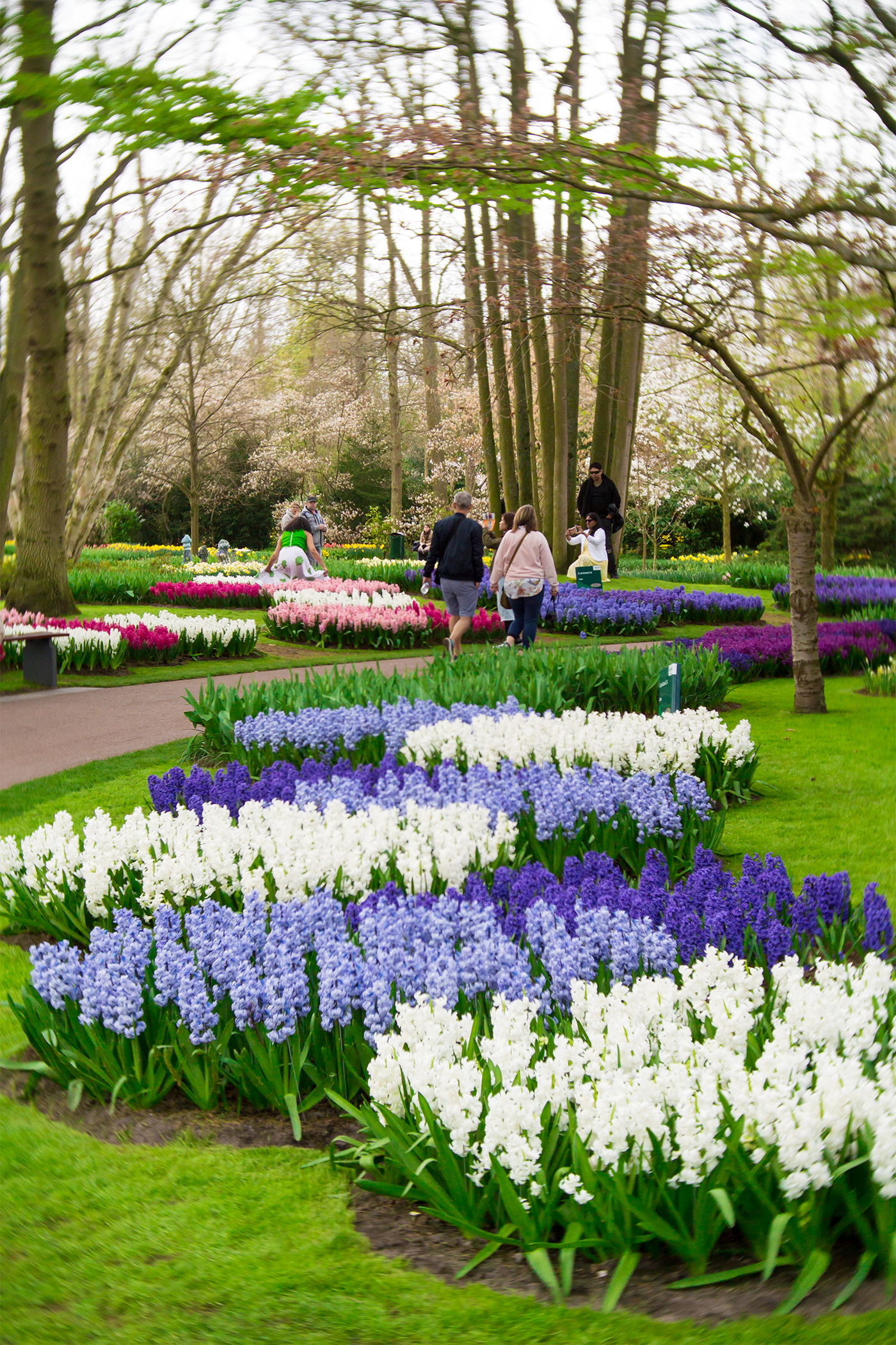 why-you-should-visit-keukenhof-tulip-garden-netherlands