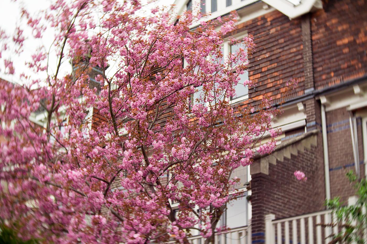 utrecht-spring-blossom
