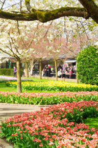 visiting-keukenhof-tulip-garden-blogger
