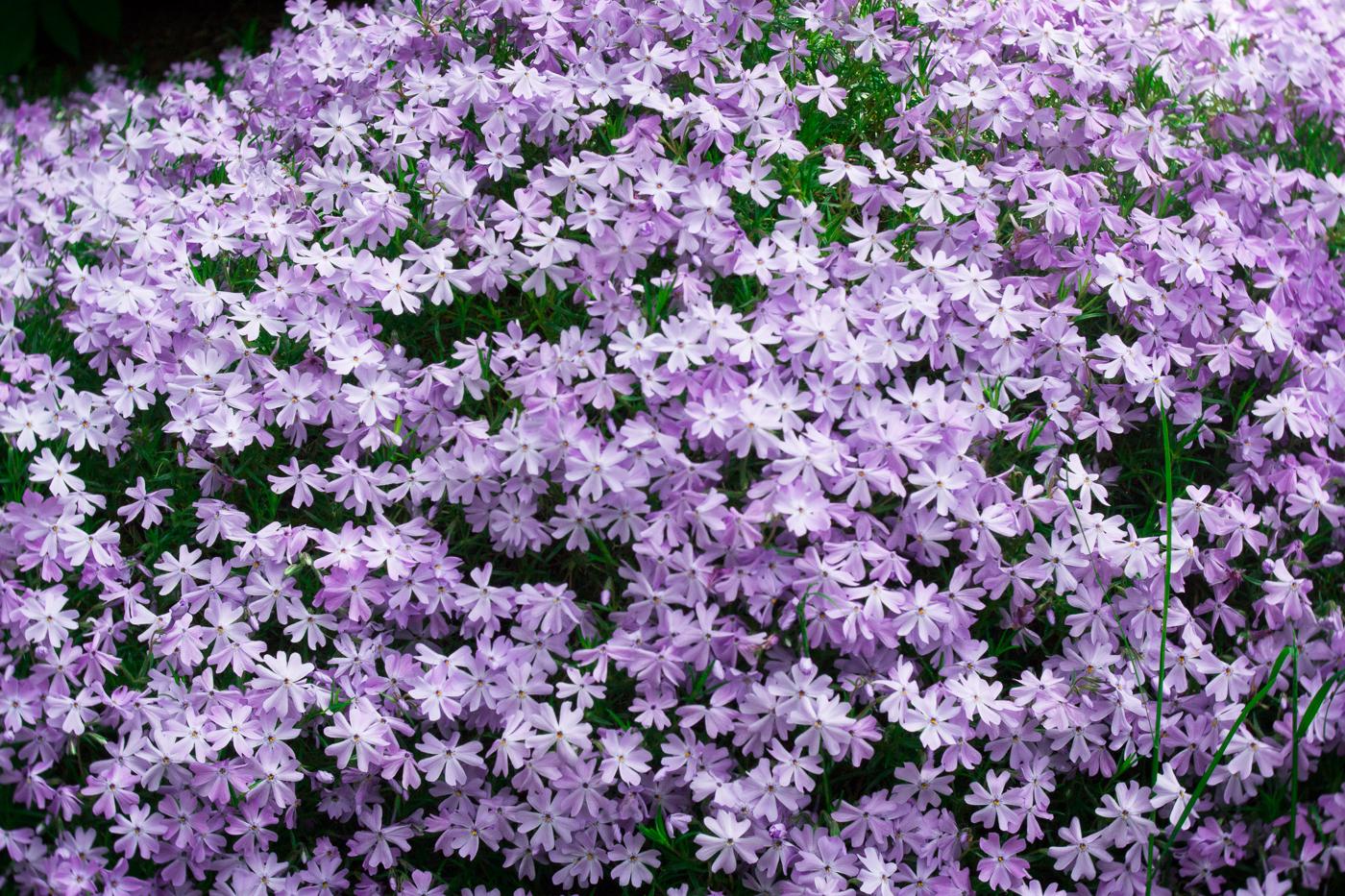 tartu-botaanikaaed-blogija-fotod